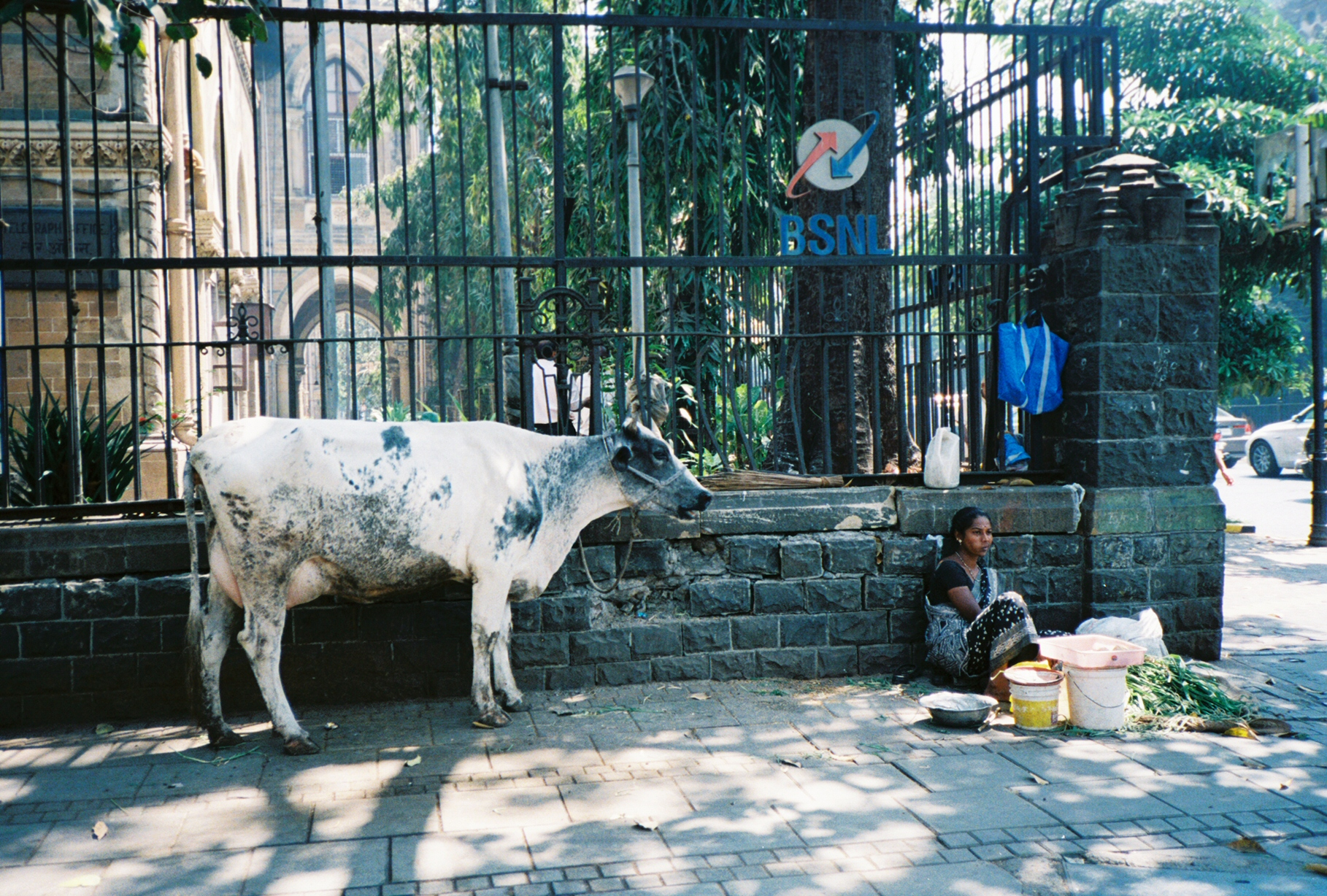 cow_mumbai_india_march_2013